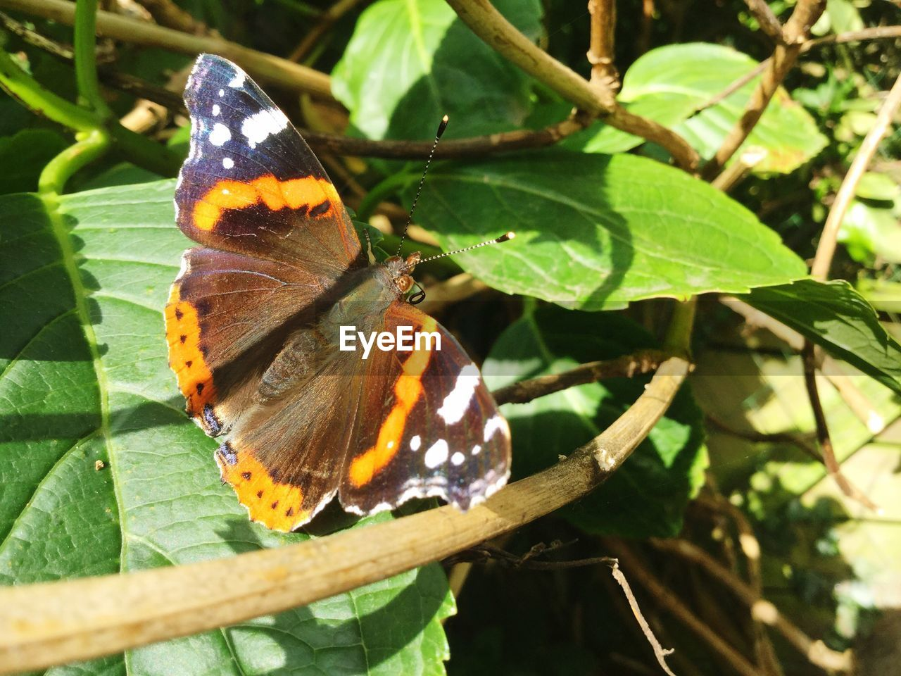 animal themes, animals in the wild, insect, leaf, one animal, butterfly - insect, wildlife, plant, nature, butterfly, close-up, animal wildlife, outdoors, no people, day, growth, beauty in nature, fragility, perching