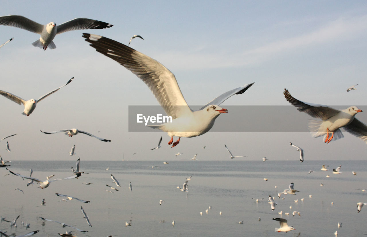 flying, bird, spread wings, animals in the wild, animal themes, mid-air, animal wildlife, nature, motion, beauty in nature, water, outdoors, seagull, day, sea, no people, sky