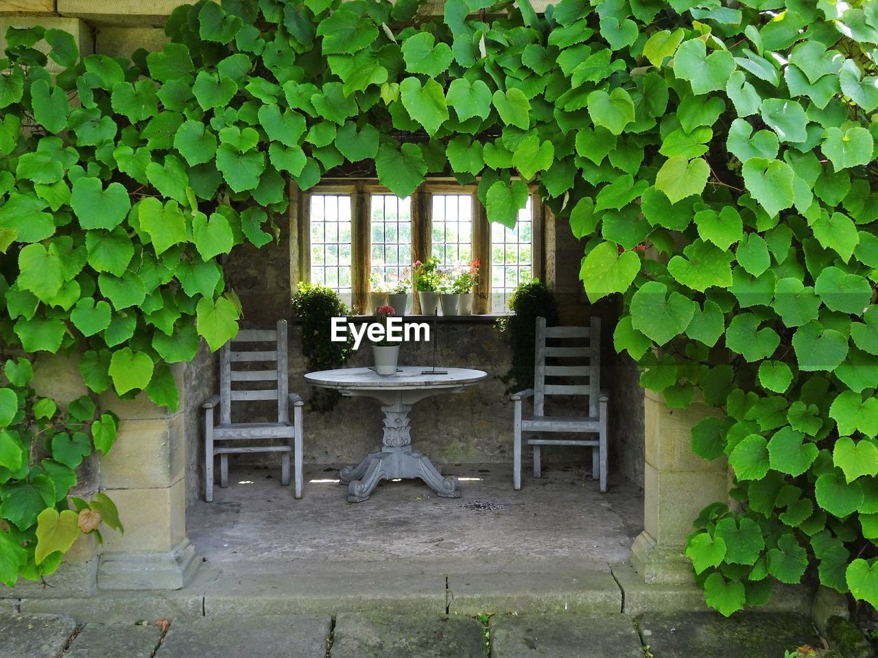plant, architecture, leaf, plant part, built structure, no people, building, growth, seat, nature, day, green color, window, outdoors, ivy, house, building exterior, foliage, lush foliage, wall - building feature, hedge