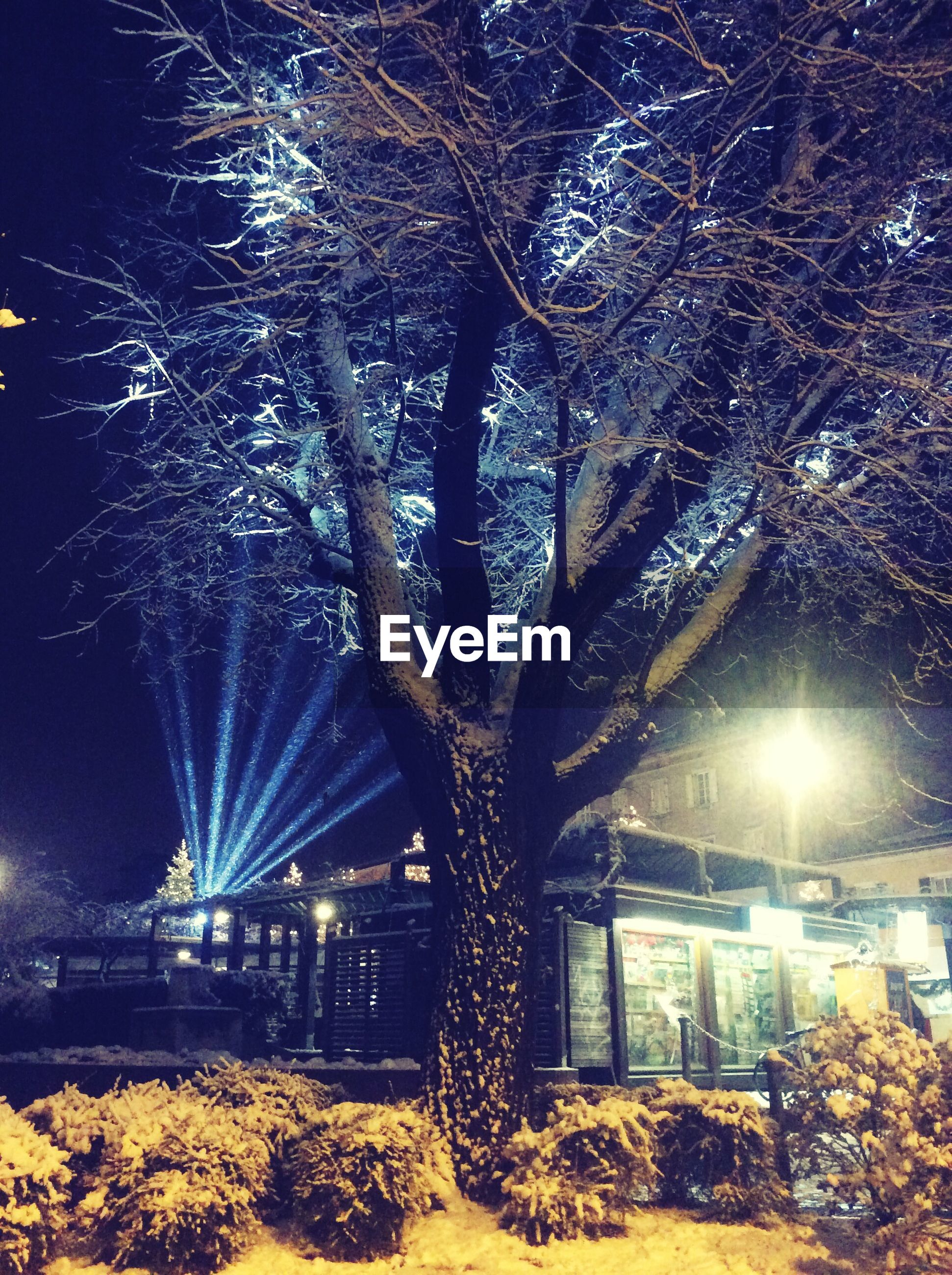 illuminated, night, tree, lighting equipment, street light, built structure, architecture, branch, building exterior, growth, nature, outdoors, season, bare tree, light - natural phenomenon, park - man made space, city, no people, low angle view, glowing