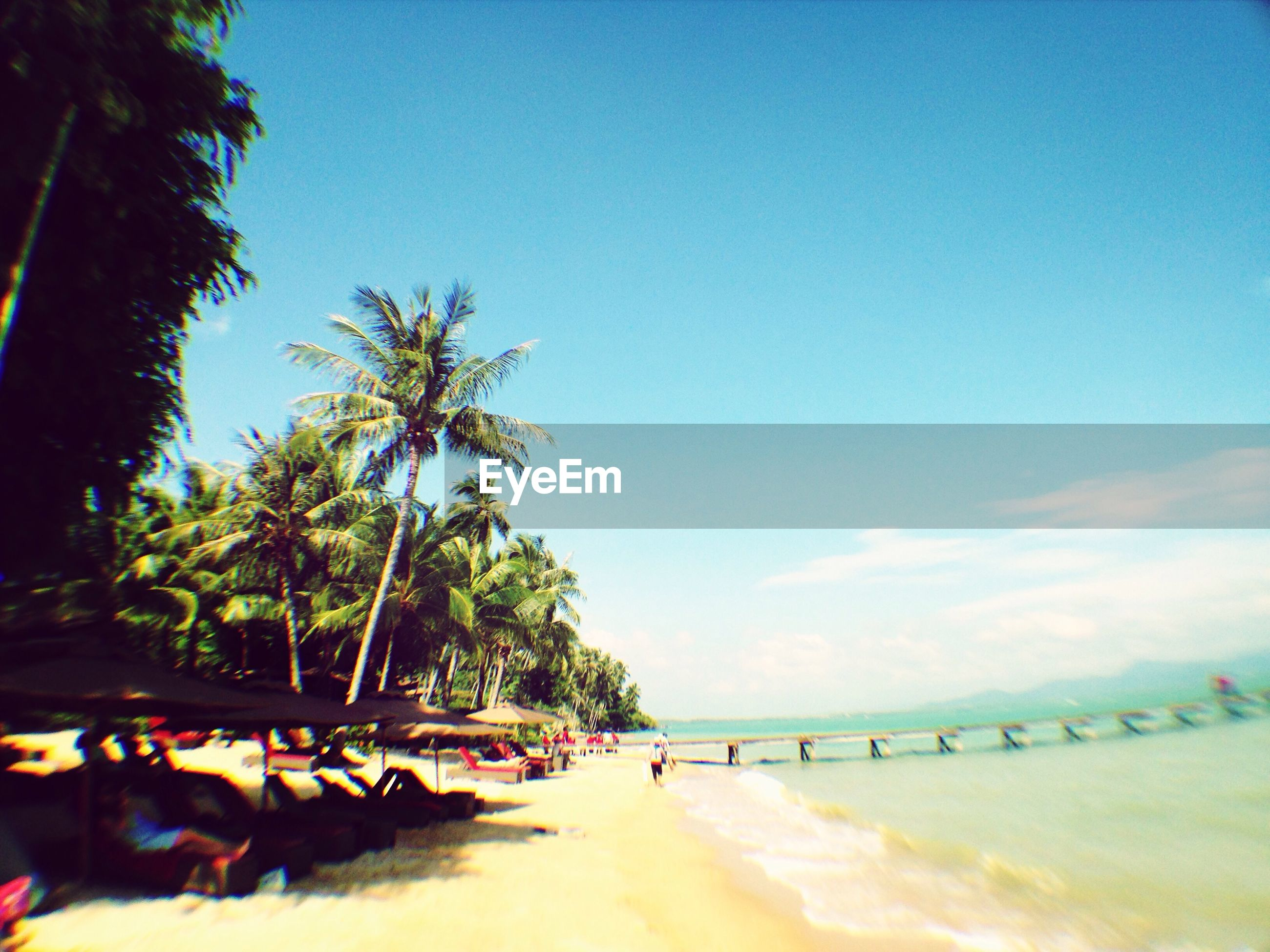 tree, beach, lifestyles, leisure activity, sky, men, sea, tranquility, water, nature, tranquil scene, person, walking, scenics, beauty in nature, blue, sand, shore, vacations
