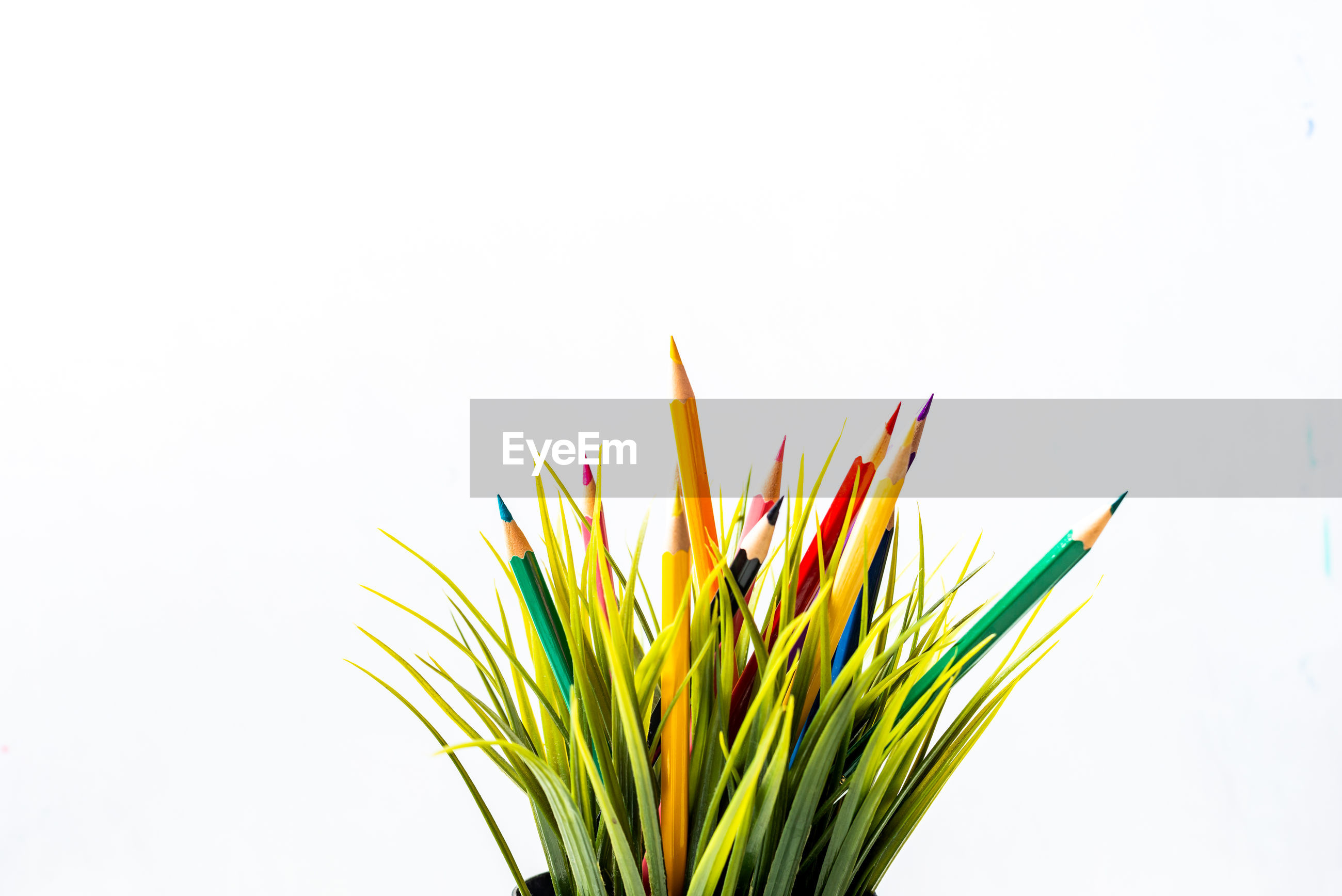 Close-up of multi colored pencils and plant against white background