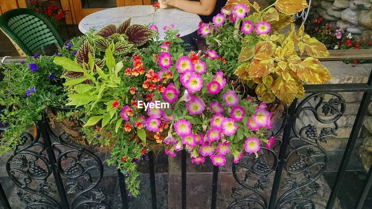 High Angle View Of Flowers By Railing In Balcony