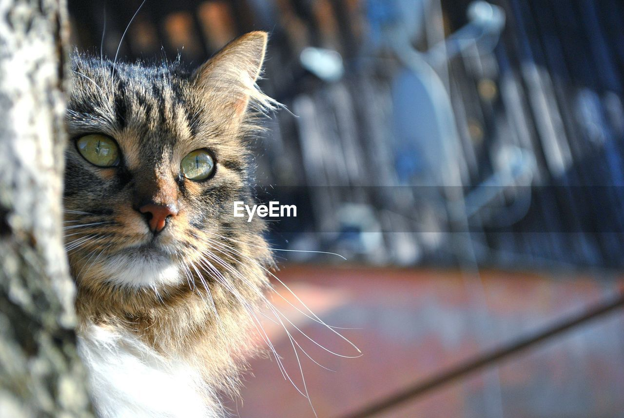 Close-up of cat staring
