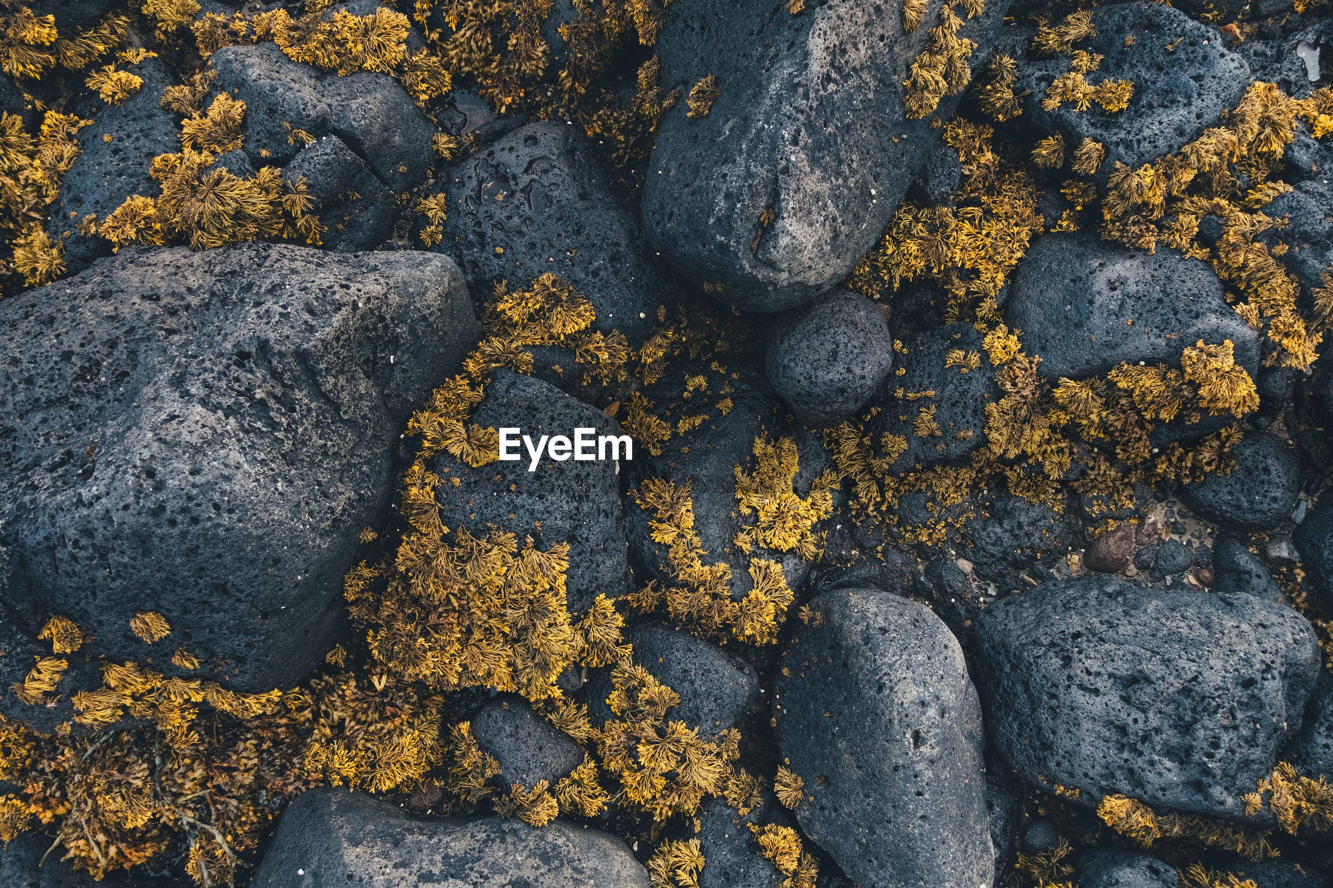 Full frame shot of flowers and rocks