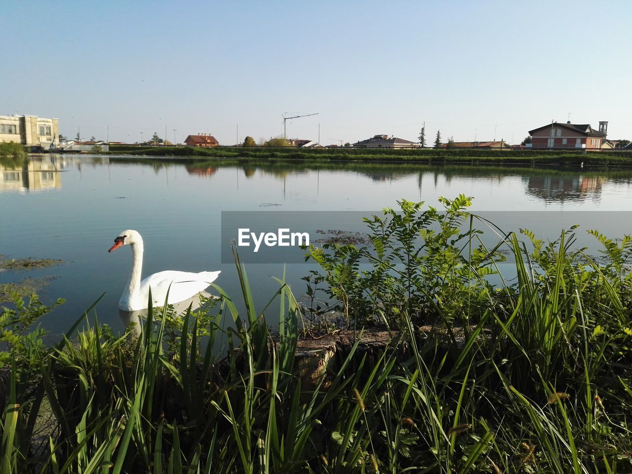 water, bird, animal themes, lake, animal, animals in the wild, sky, animal wildlife, plant, vertebrate, nature, no people, day, architecture, built structure, clear sky, reflection, one animal, building exterior, outdoors