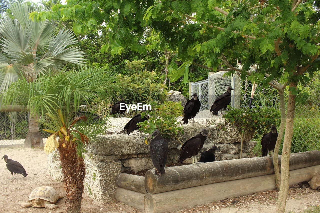 Vultures In Park