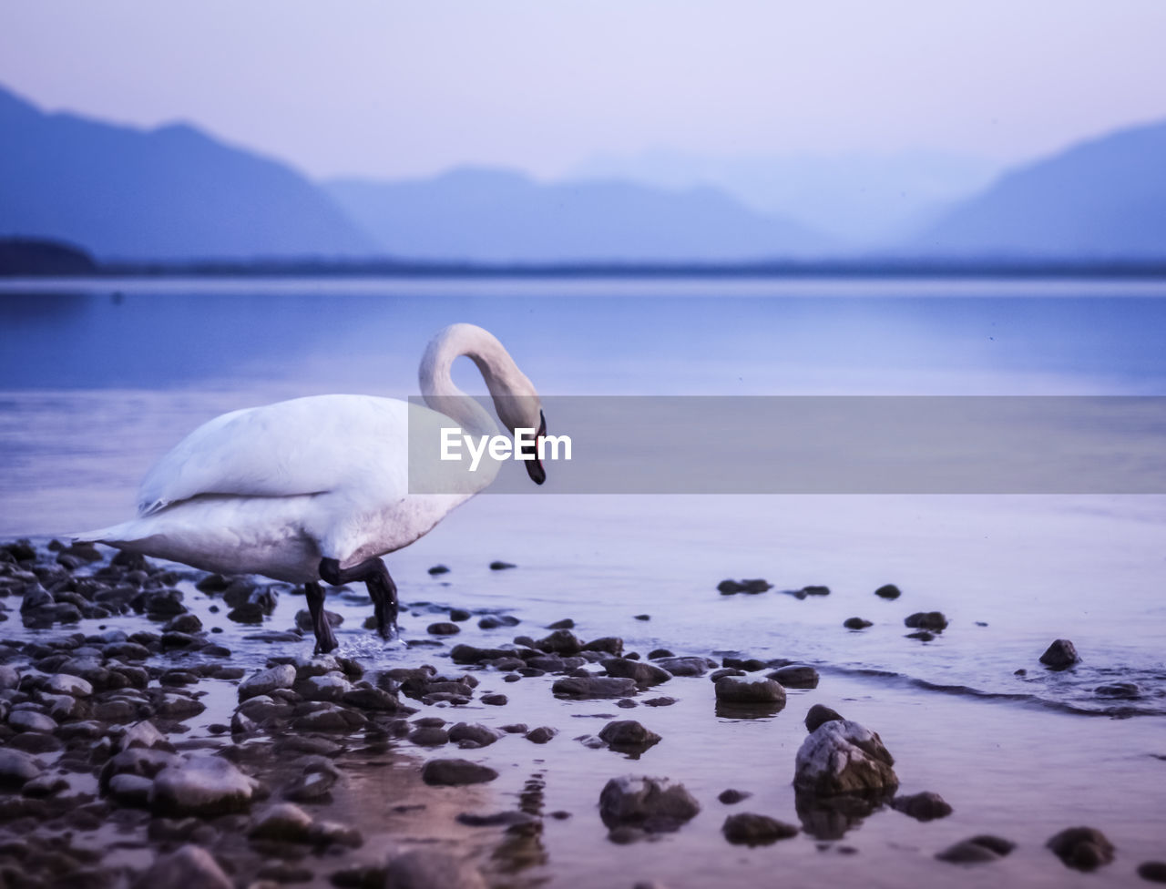 VIEW OF BIRD ON ROCK AT LAKE