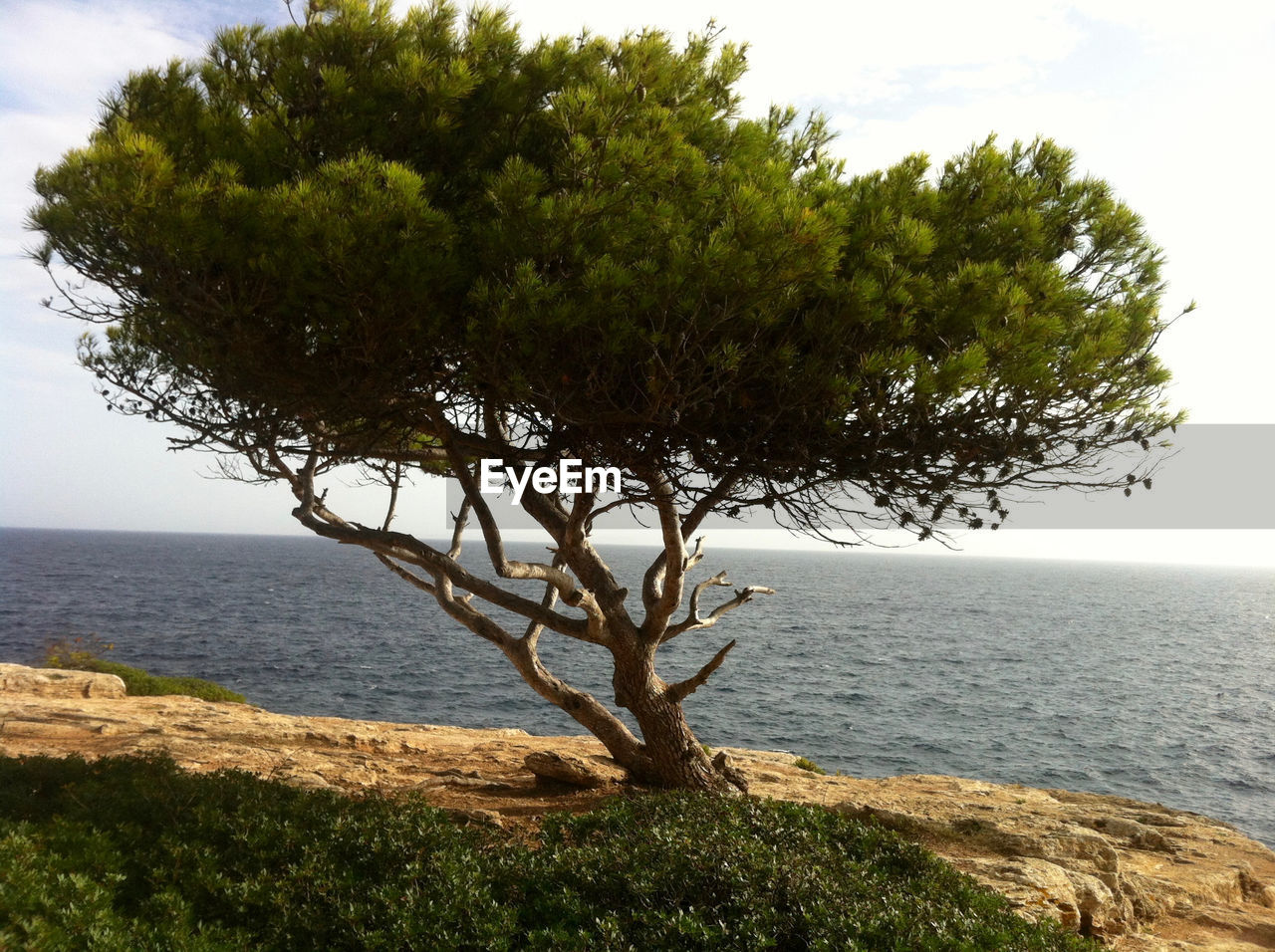 sea, tree, horizon over water, water, nature, beauty in nature, scenics, growth, tranquility, tranquil scene, branch, sky, outdoors, foreground, lone, day, no people, clear sky