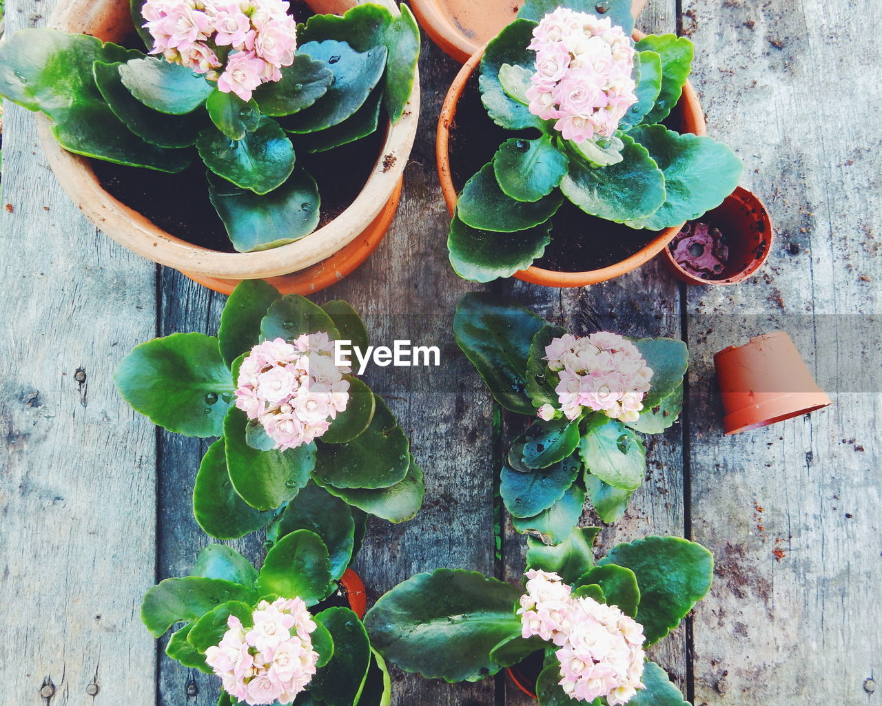 High Angle View Of Potted Plants On Wooden Table