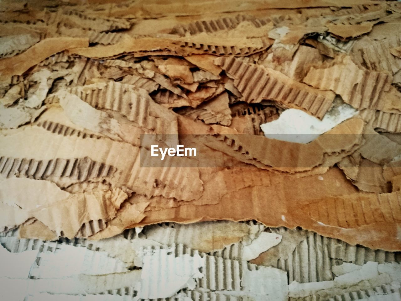 no people, close-up, indoors, full frame, pattern, backgrounds, architecture, nature, extinct, textured, animal teeth, art and craft, animal representation, still life, creativity, day, old, high angle view, wood - material