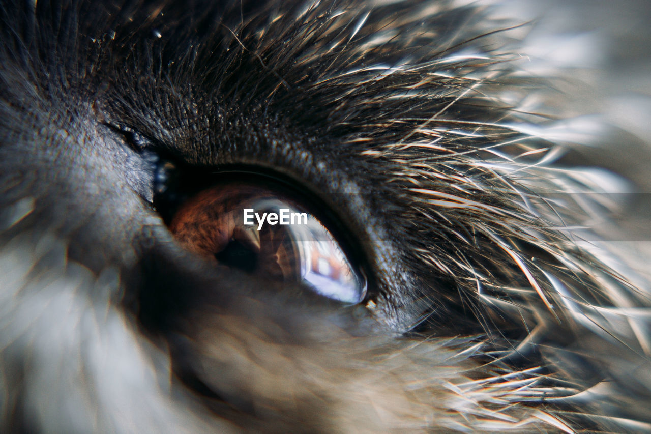EXTREME CLOSE-UP OF A EYE