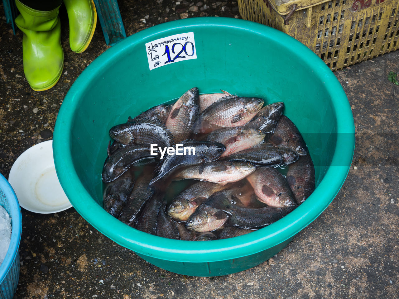 High Angle View Of Fresh Fish In Bucket For Sale On Mahachai Fish Market, Thailand