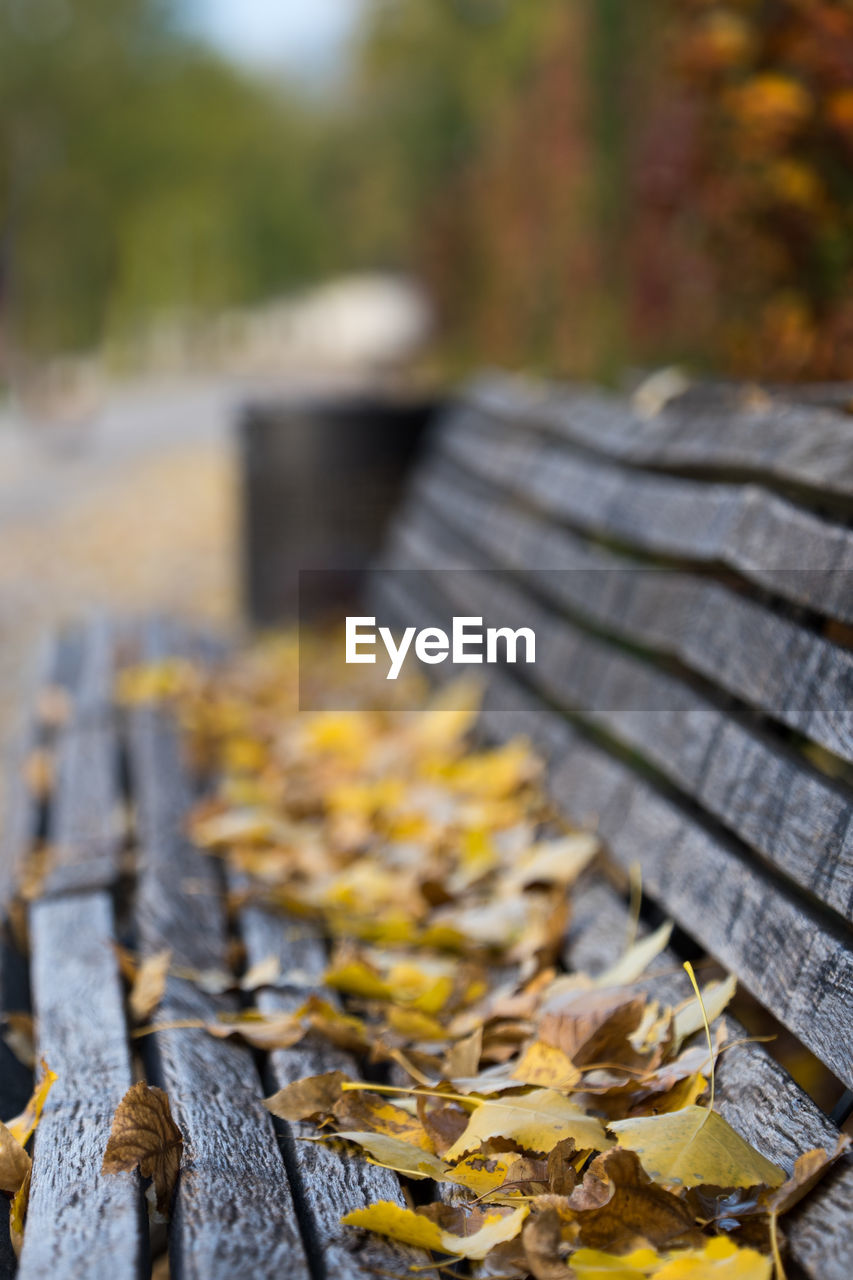 autumn, change, focus on foreground, day, leaf, nature, selective focus, no people, plant part, wood - material, yellow, leaves, dry, close-up, falling, plant, outdoors, tree, transportation, land, wheel, tire