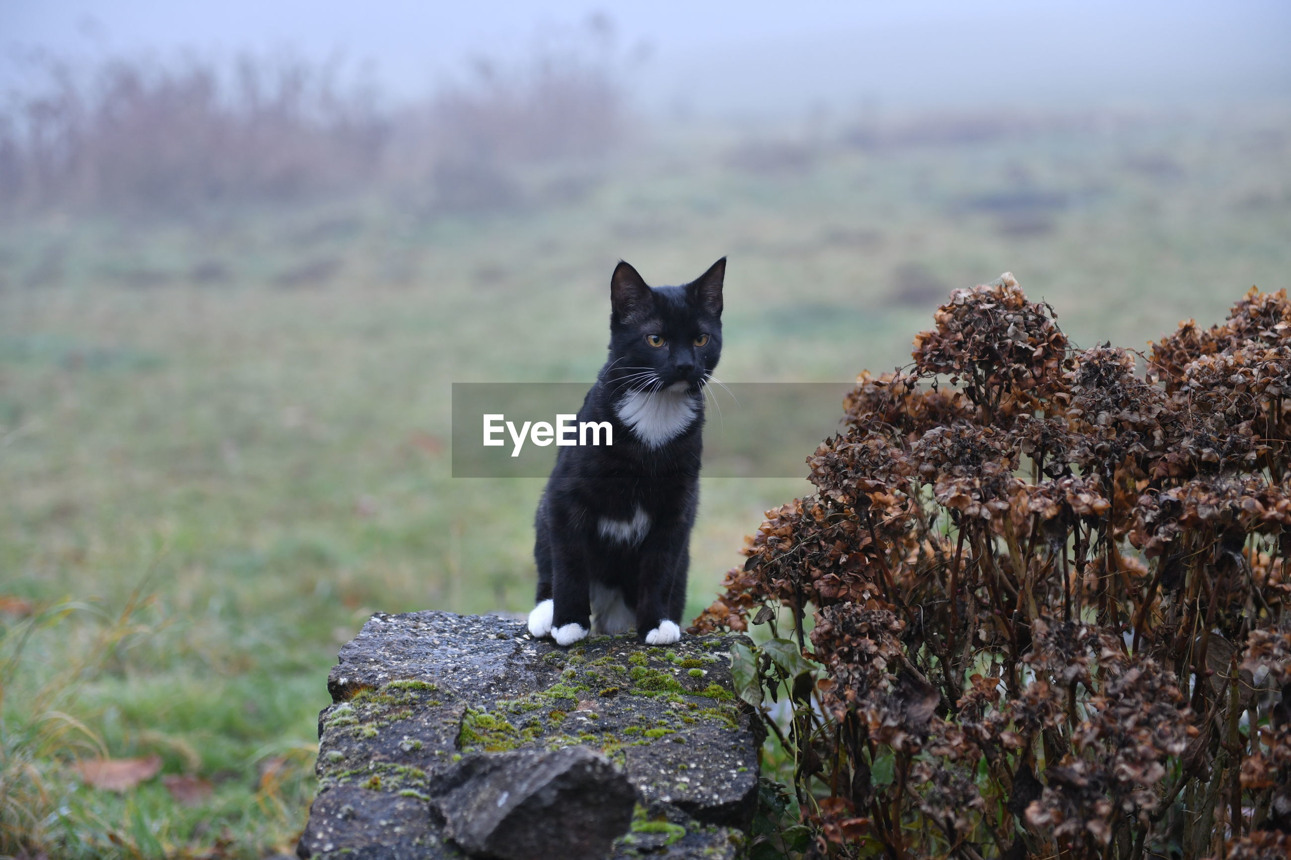 Cat sitting on rock during foggy weather