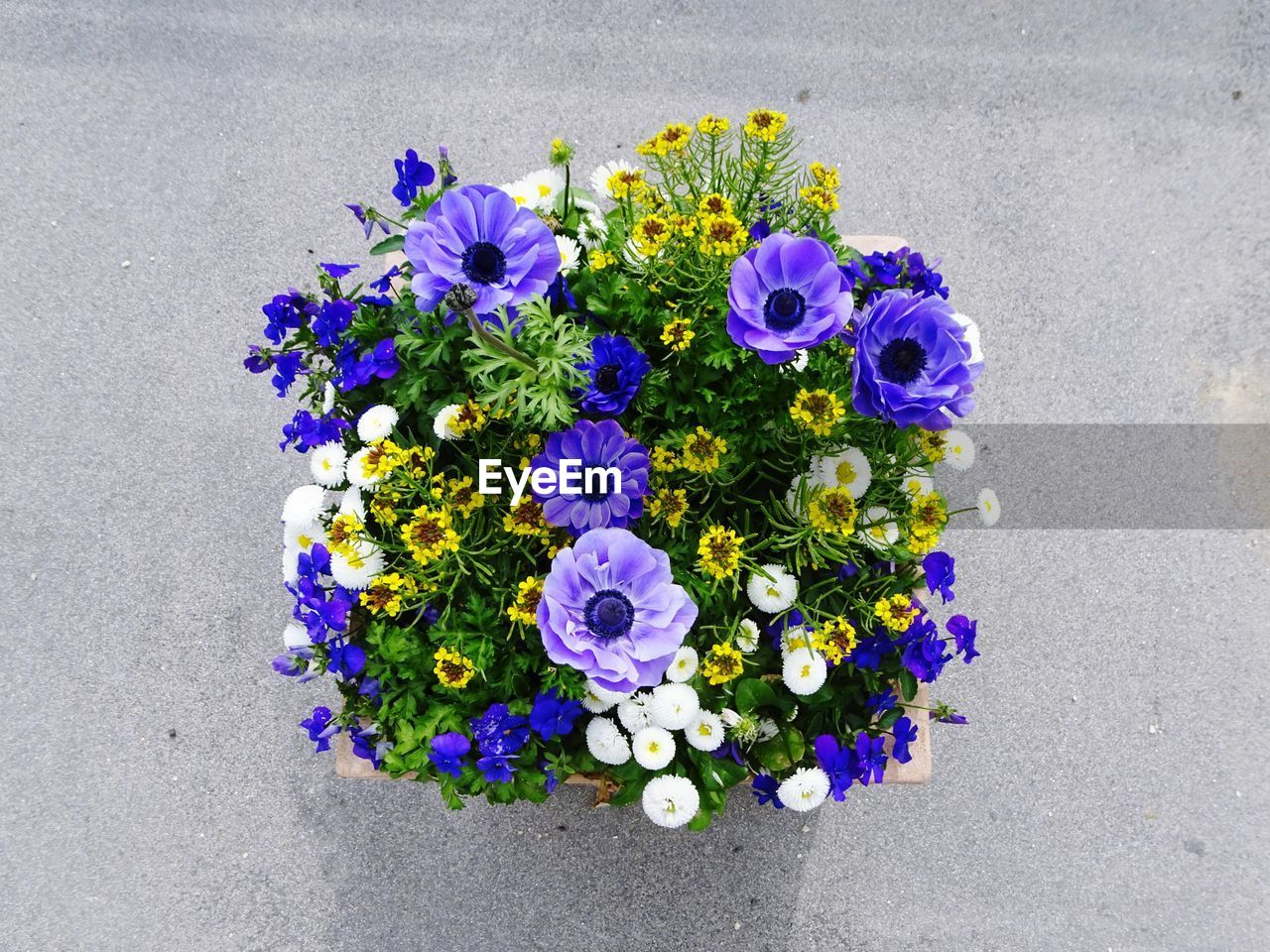 flowering plant, flower, freshness, fragility, vulnerability, plant, beauty in nature, petal, nature, flower head, high angle view, purple, no people, close-up, directly above, blue, choice, day, inflorescence, outdoors, flower arrangement, bouquet, bunch of flowers, concrete