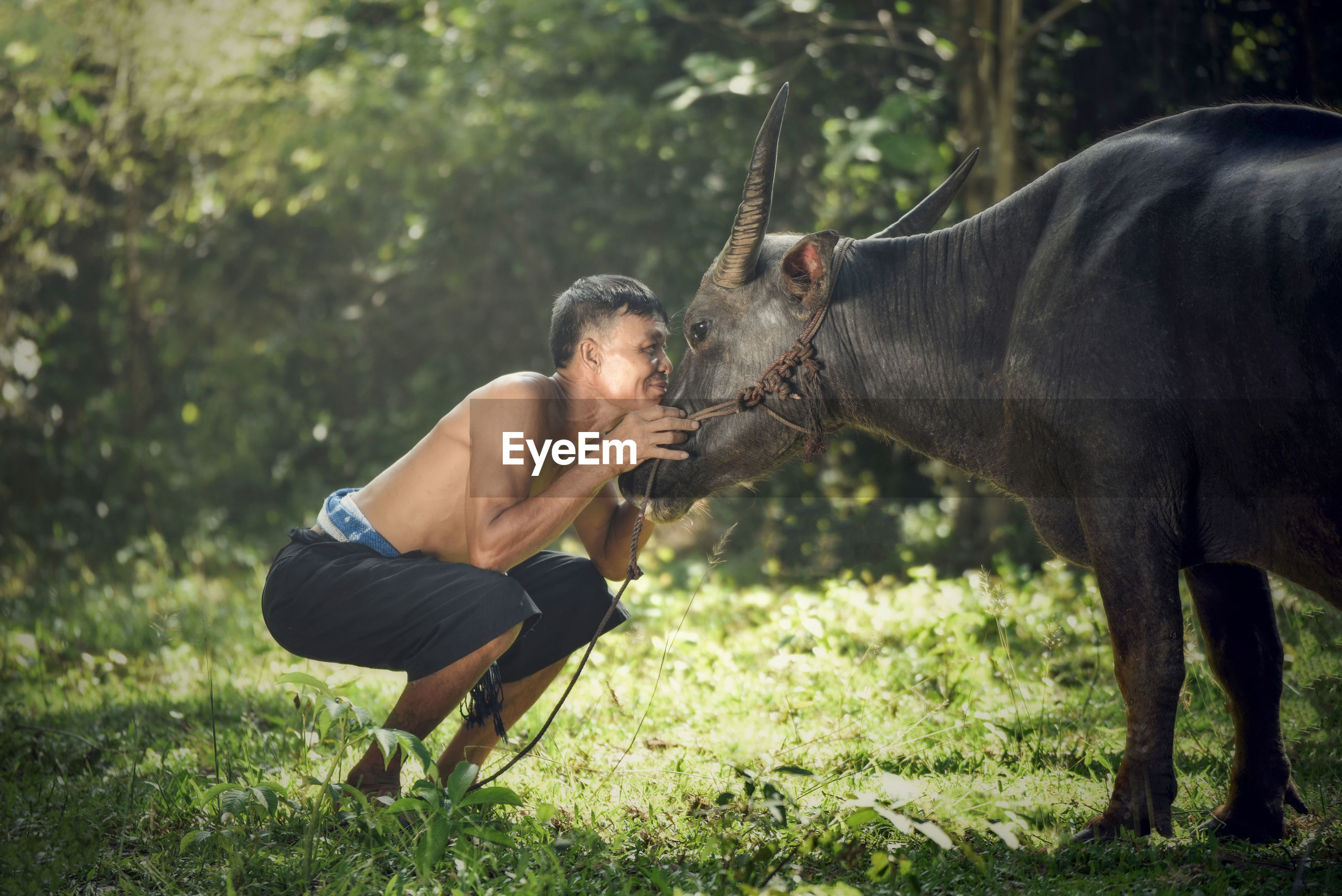 Happy man looking at cow on field