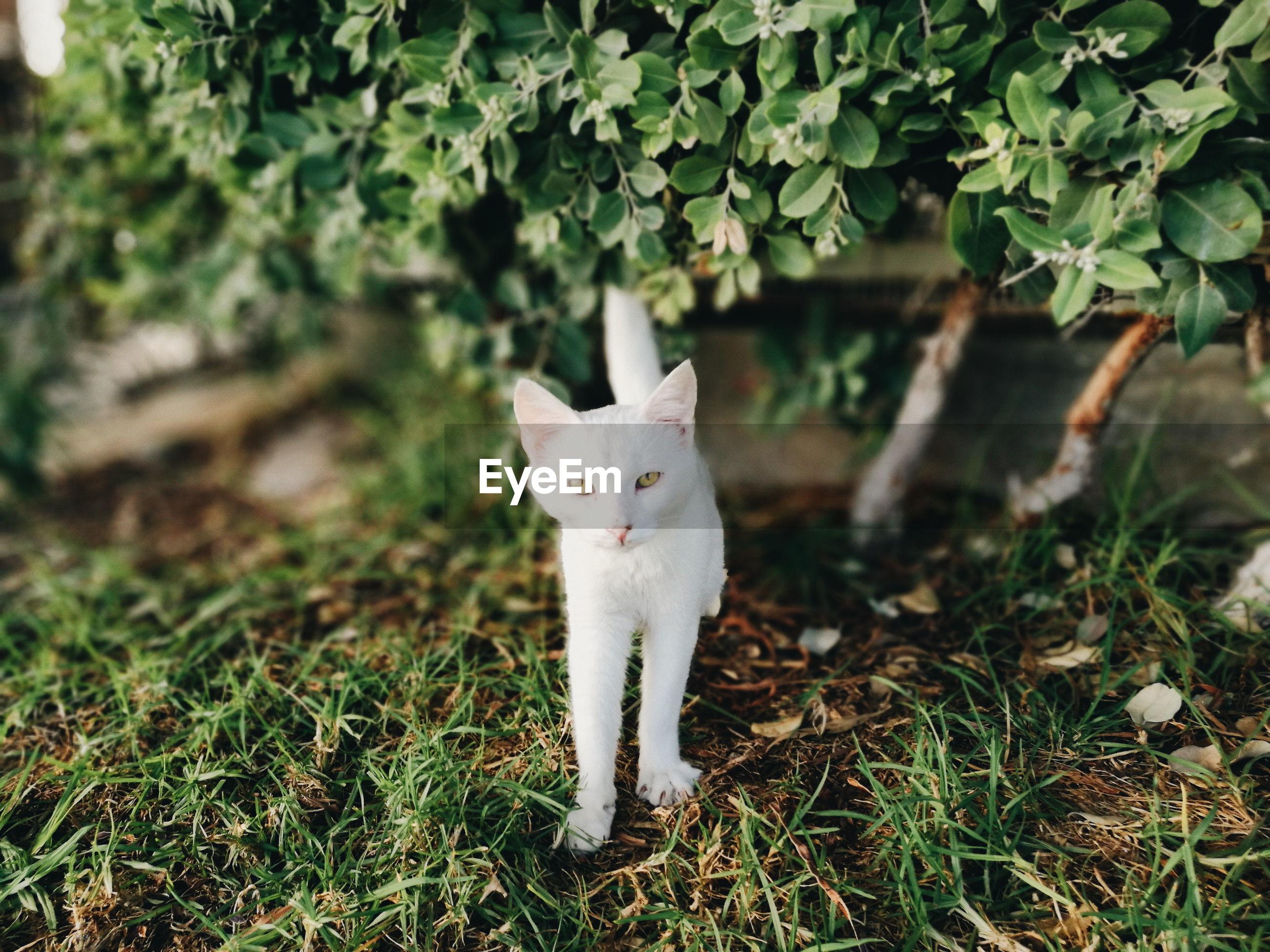 Portrait of cat standing by plants in yard