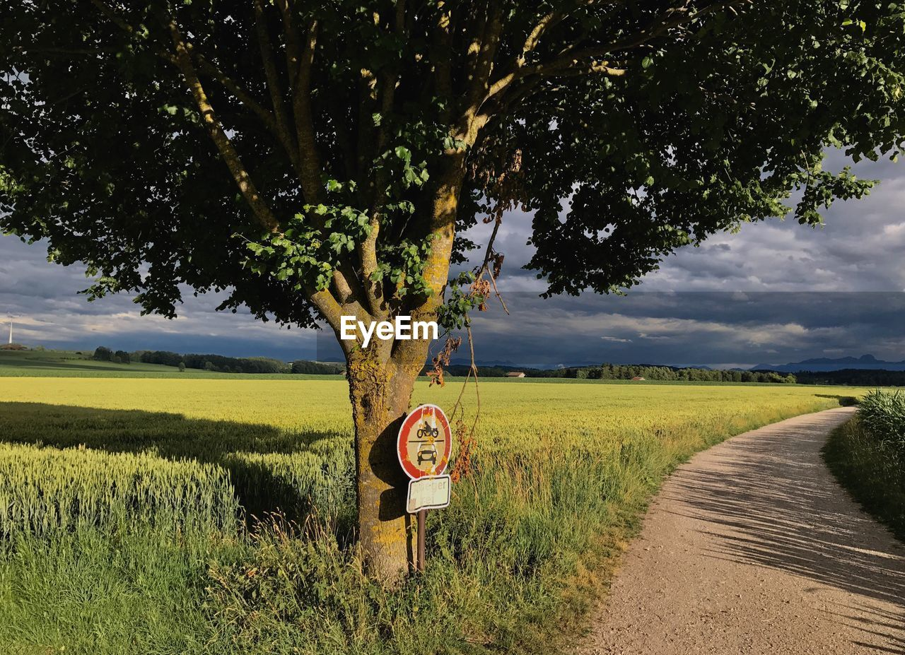 plant, road, sign, field, land, tree, landscape, communication, growth, sky, road sign, transportation, nature, grass, scenics - nature, no people, tranquility, beauty in nature, tranquil scene, rural scene, outdoors