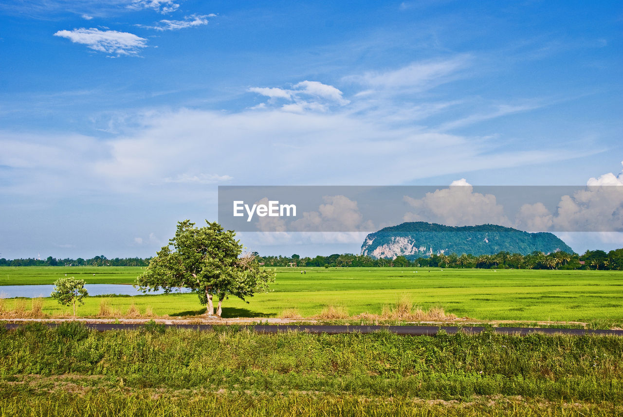 sky, plant, landscape, tranquil scene, environment, scenics - nature, cloud - sky, tranquility, beauty in nature, field, land, tree, growth, green color, nature, grass, rural scene, day, agriculture, idyllic, no people, outdoors, plantation