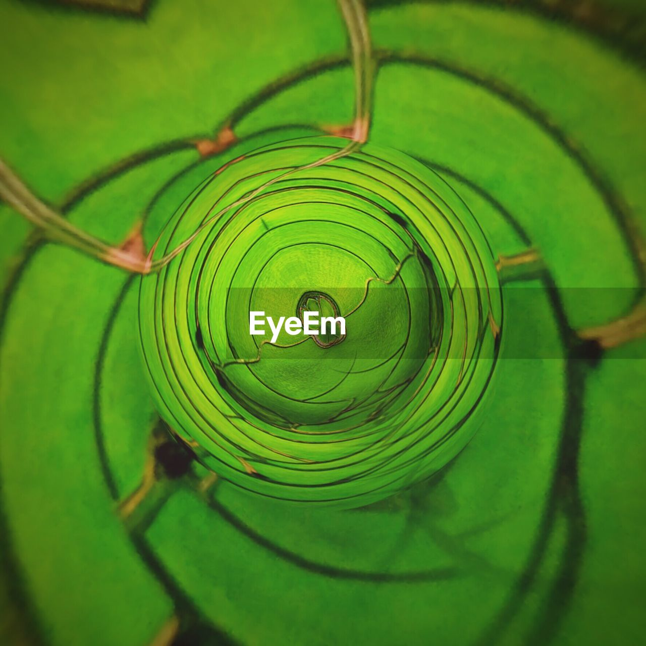 green color, nature, spiral, beauty in nature, fragility, no people, one animal, focus on foreground, concentric, close-up, outdoors, leaf, animal themes, freshness, spider web, water, animals in the wild, growth, web, day