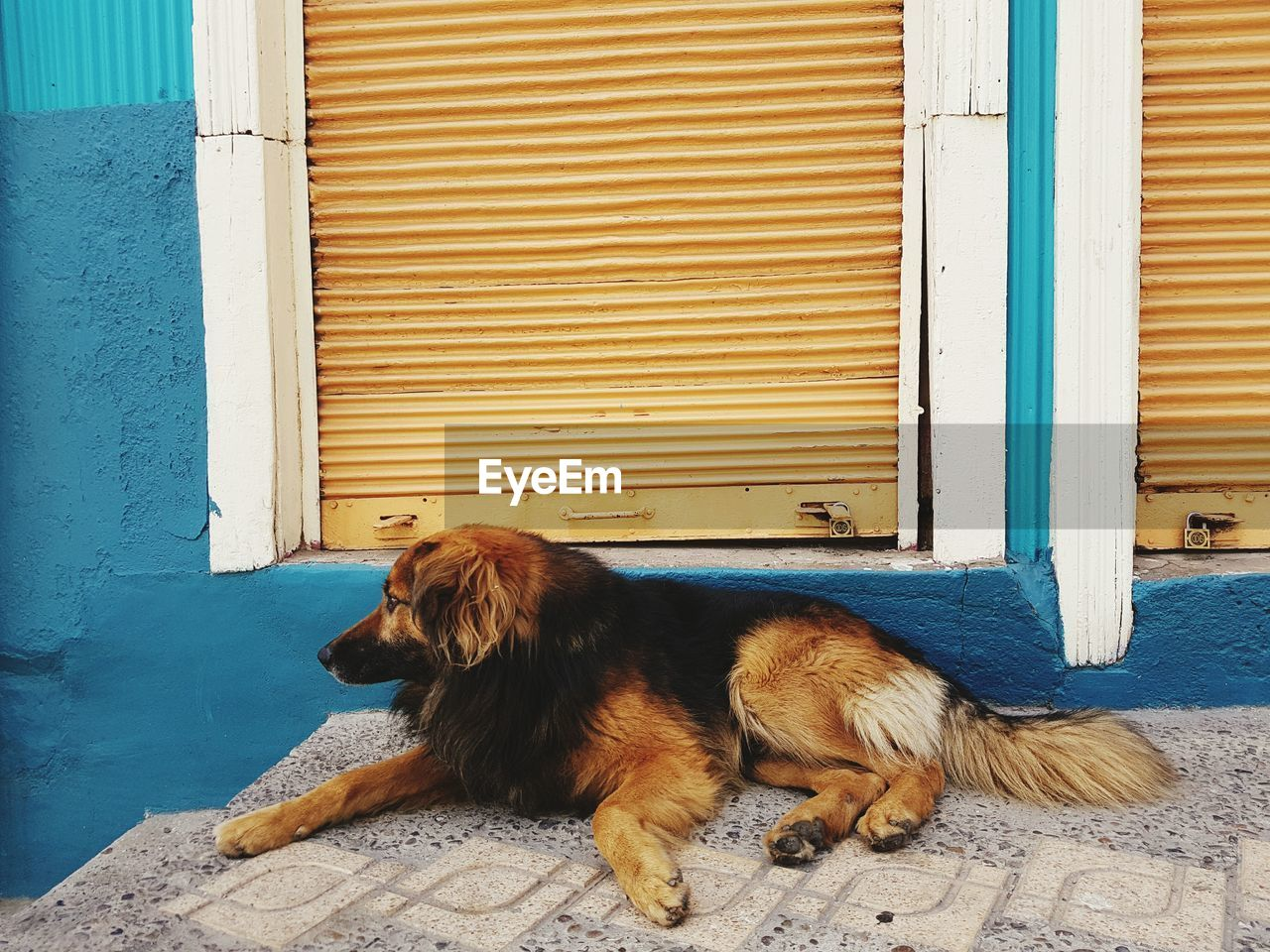 DOG LYING ON DOOR