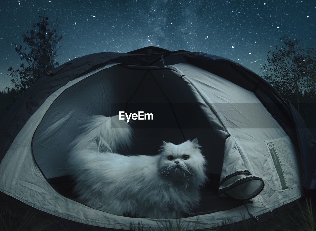 Cat Relaxing In Tent Against Sky At Night