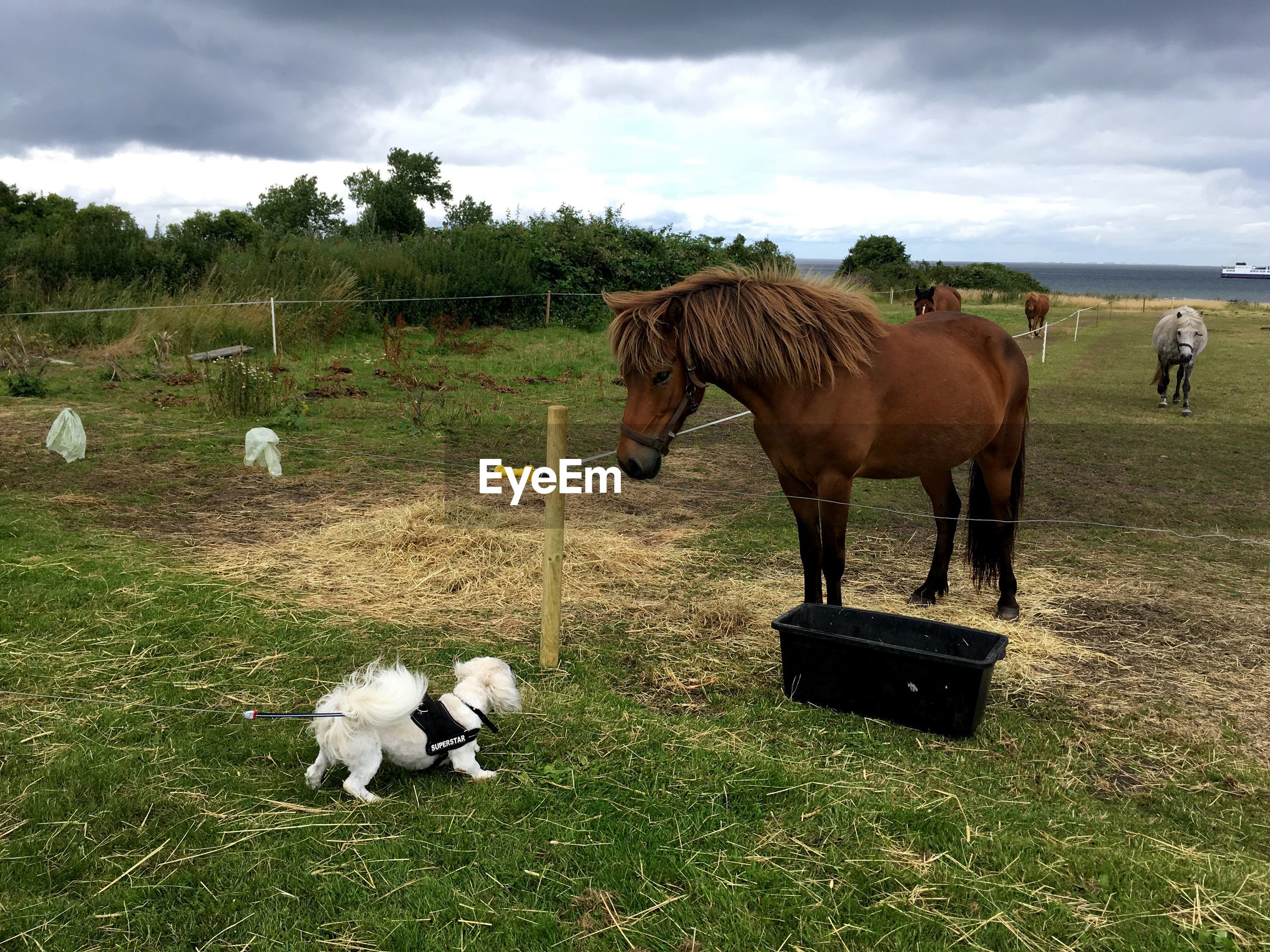 Horses and dog on field against cloudy sky