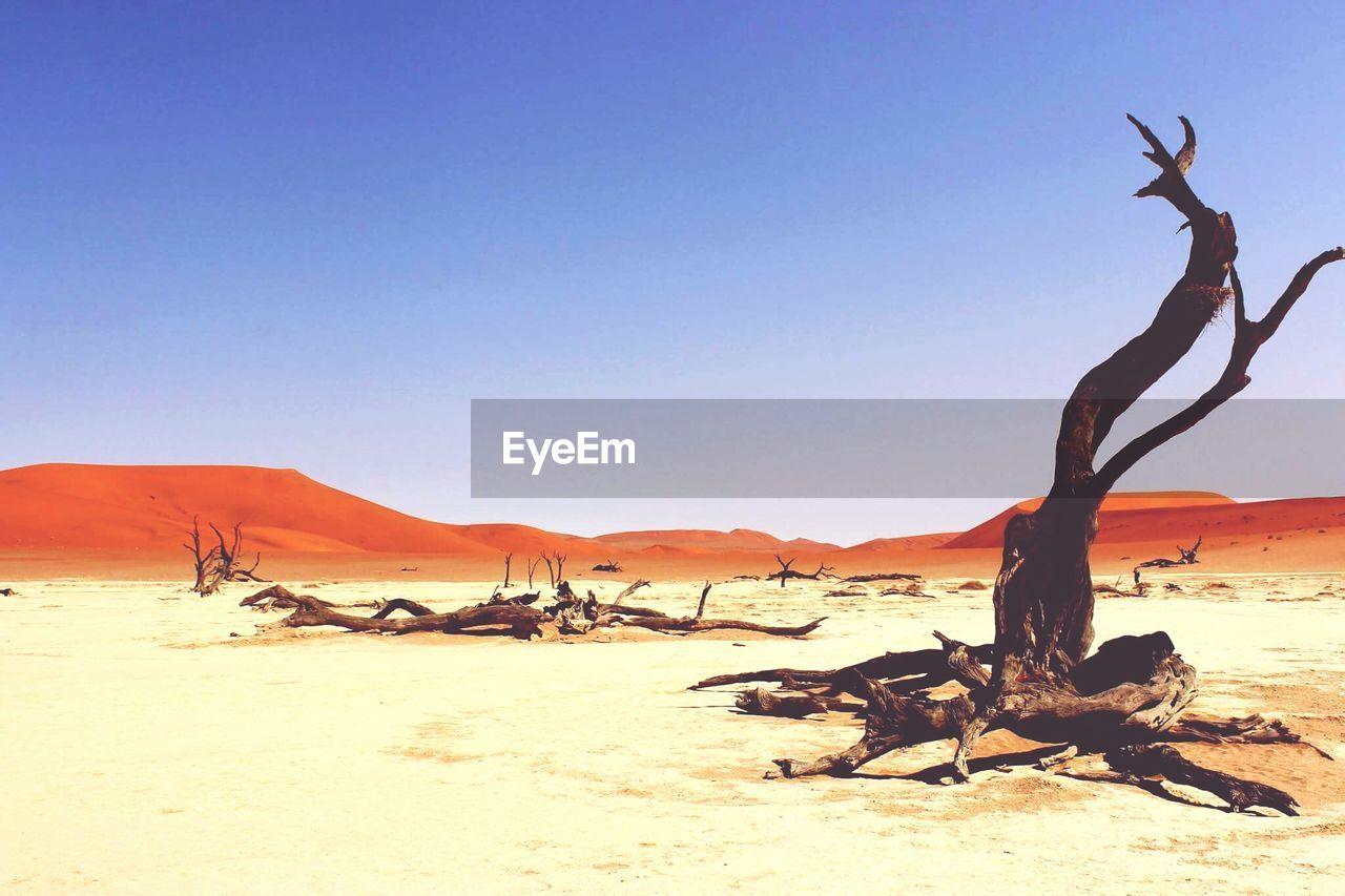 Dead Trees On Field In Desert Against Clear Sky