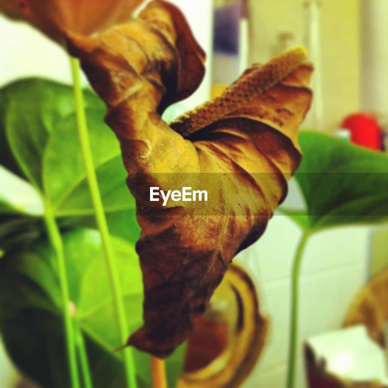 leaf, growth, plant, close-up, nature, fragility, no people, day, outdoors, beauty in nature, freshness, flower