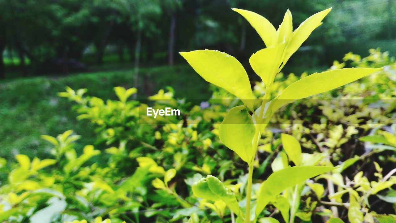 plant, growth, nature, green color, leaf, outdoors, beauty in nature, day, no people, freshness, close-up, fragility