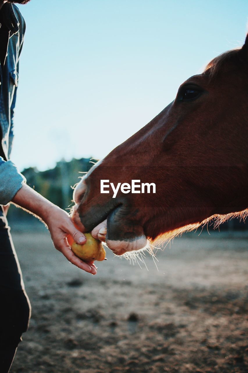 Close-Up Of Hand Feeding Horse