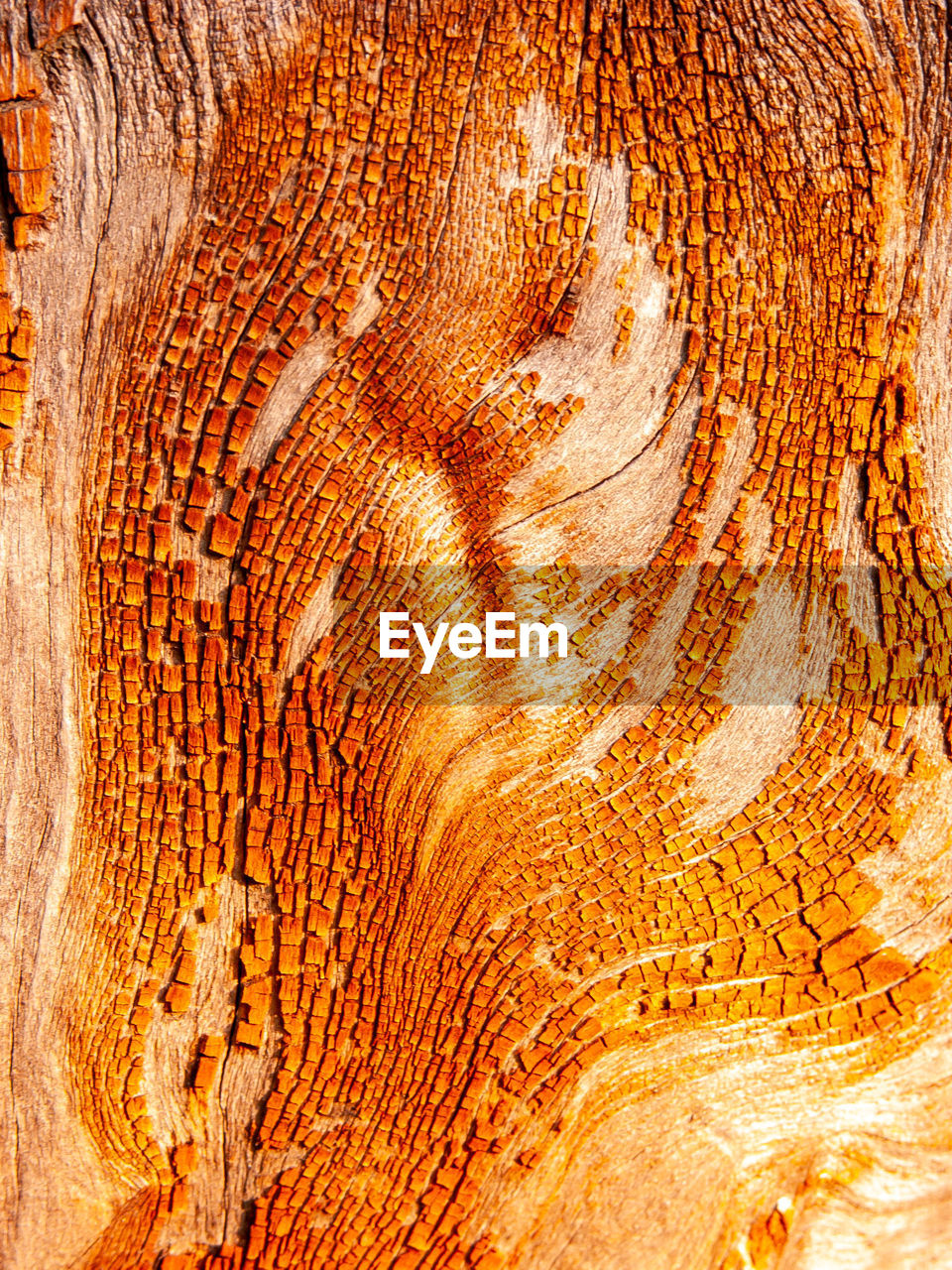 textured, close-up, backgrounds, full frame, wood - material, tree, pattern, tree trunk, trunk, no people, plant, natural pattern, wood, rough, bark, nature, brown, cross section, wood grain, forest, woodland, tree ring, textured effect