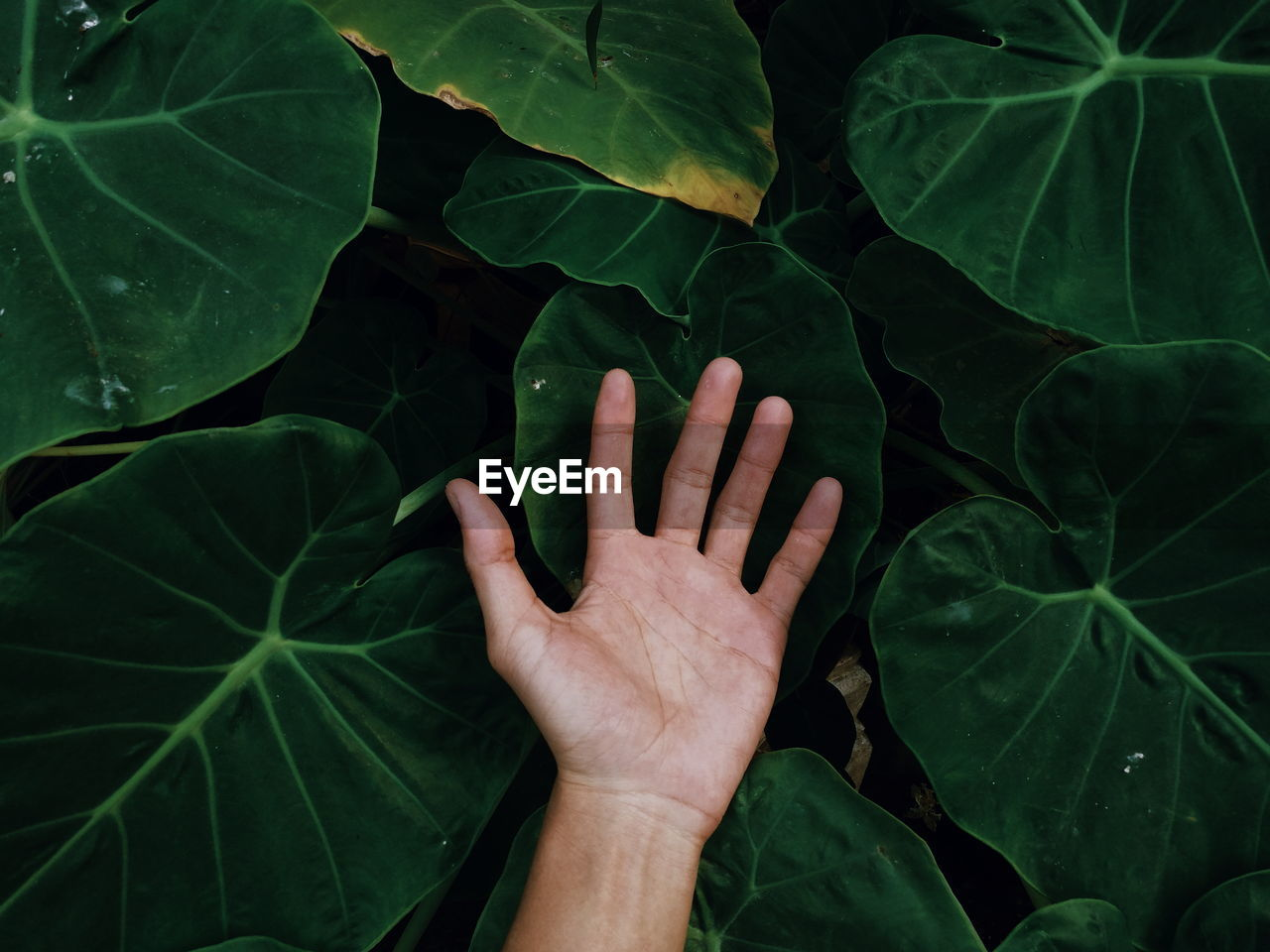 Cropped Hand Of Person Amidst Green Leaves