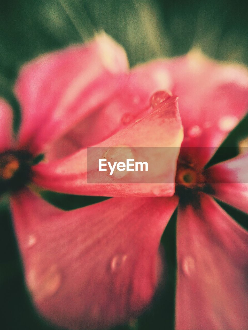 flower, petal, fragility, nature, flower head, growth, beauty in nature, freshness, close-up, blooming, no people, plant, outdoors, soft focus, day