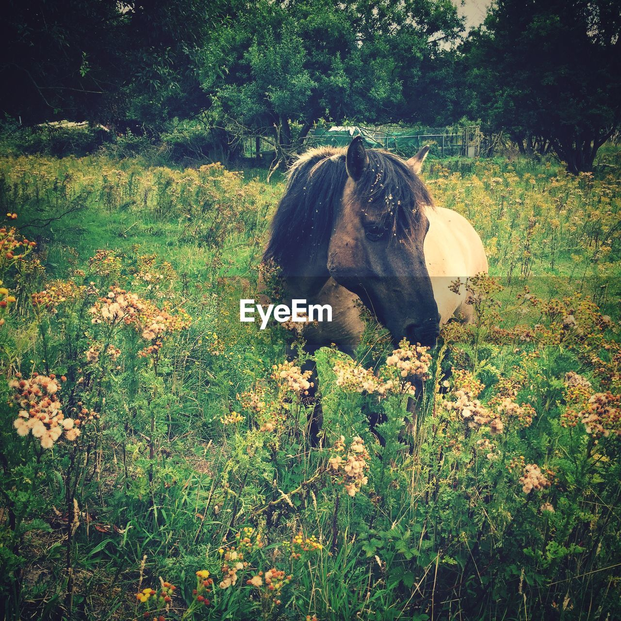 Horse Standing Amidst Plants On Field