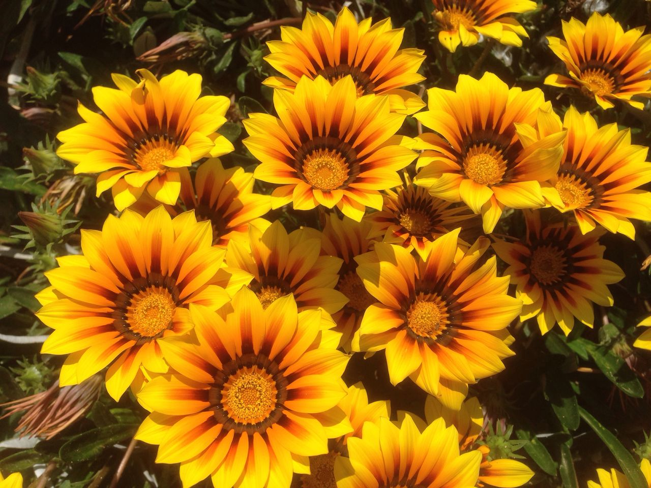 flower, yellow, nature, growth, plant, petal, beauty in nature, flower head, fragility, no people, blooming, outdoors, freshness, day