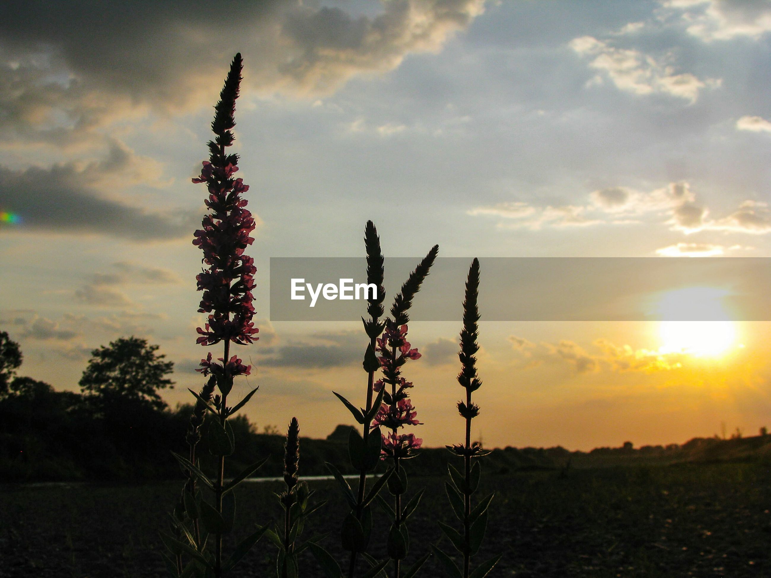 sunset, growth, nature, sky, field, plant, landscape, beauty in nature, no people, cloud - sky, outdoors, tranquility, sun, scenics, grass, day, freshness