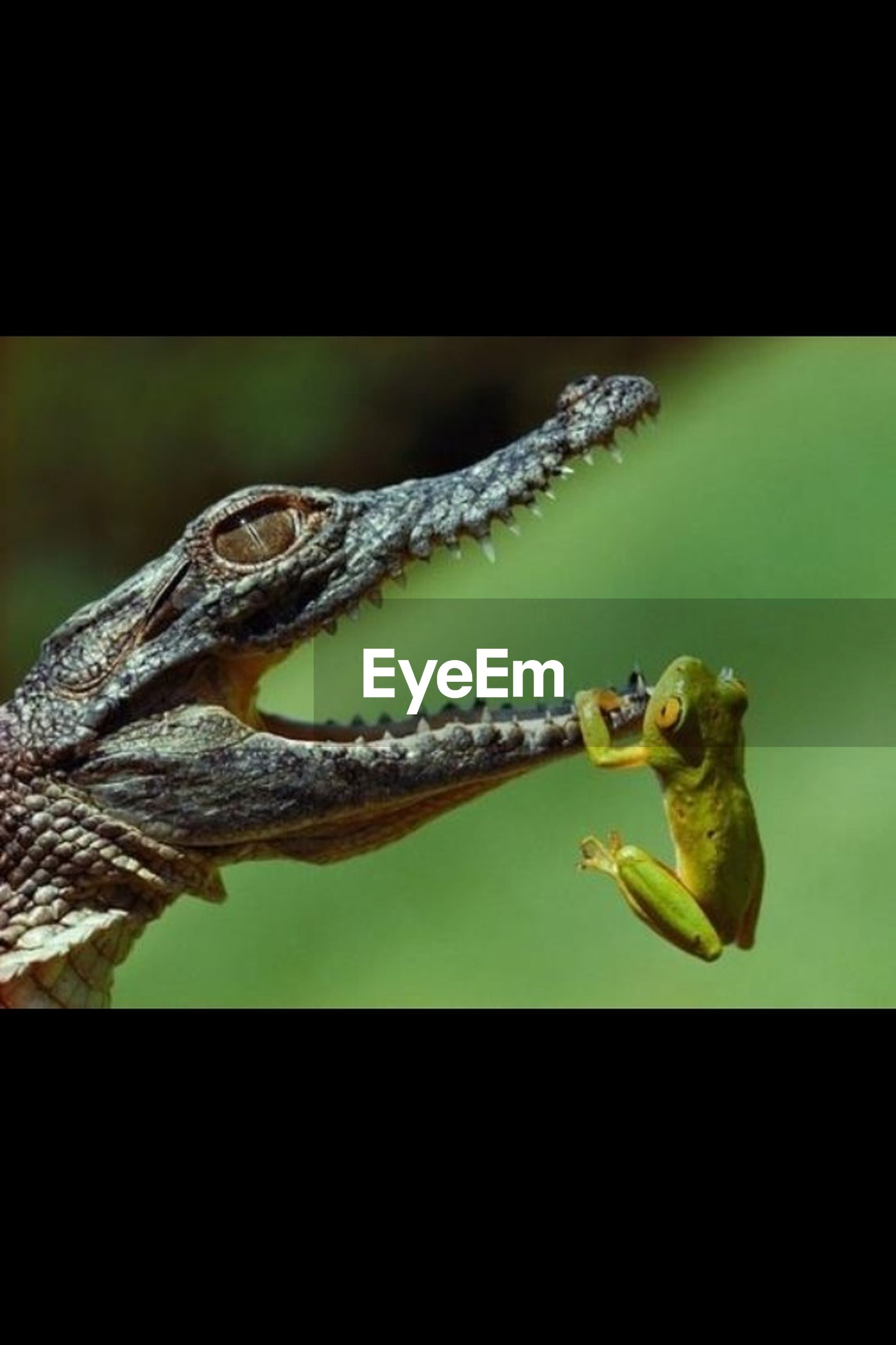 animal themes, animals in the wild, wildlife, one animal, close-up, transfer print, auto post production filter, indoors, focus on foreground, nature, reptile, perching, insect, no people, bird, two animals, day, zoology, full length