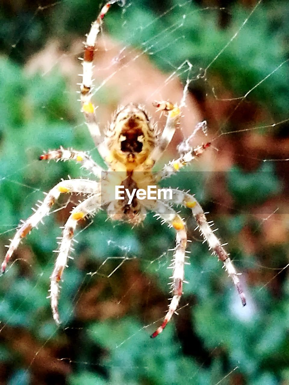 spider, one animal, animal themes, spider web, animals in the wild, insect, animal wildlife, nature, no people, web, outdoors, close-up, day, animal leg
