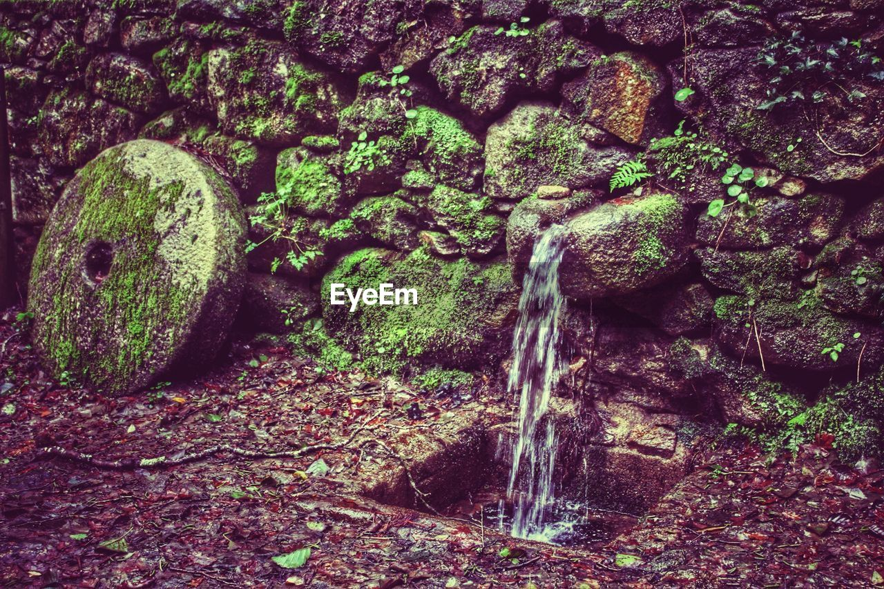 Water flowing through moss covered stone wall in forest