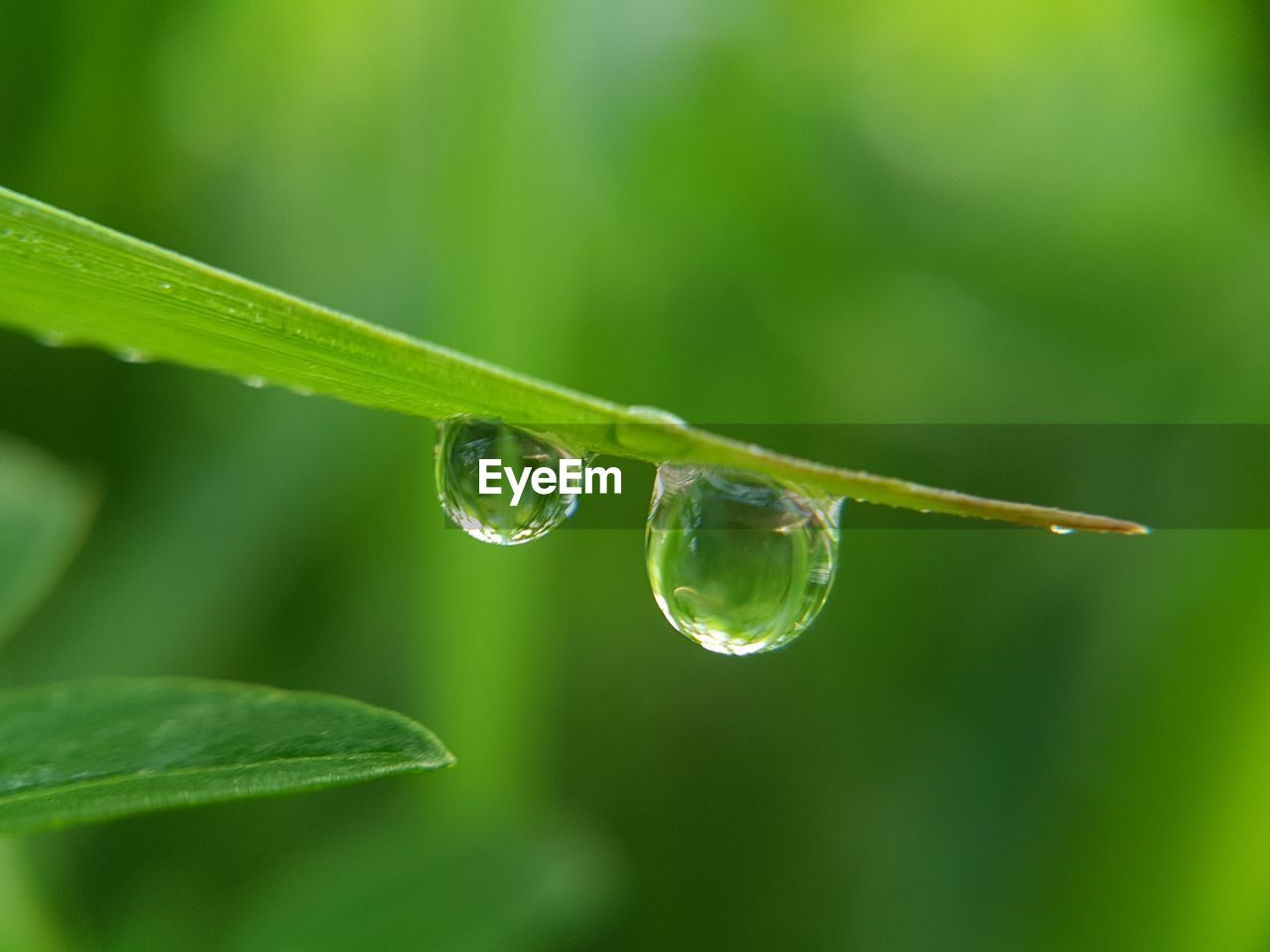 green color, drop, nature, fragility, leaf, no people, beauty in nature, growth, freshness, close-up, focus on foreground, water, plant, day, outdoors, grass