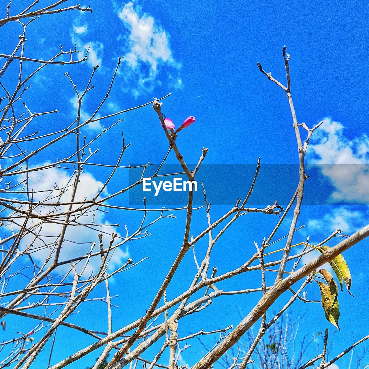 low angle view, blue, sky, branch, day, growth, no people, nature, tree, outdoors, beauty in nature, cloud - sky