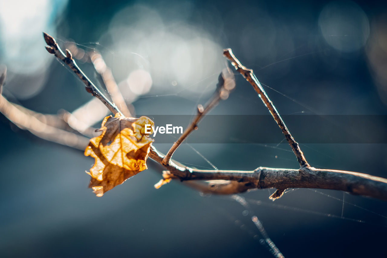 focus on foreground, nature, close-up, plant, no people, fragility, selective focus, day, branch, twig, vulnerability, tree, leaf, plant part, dry, sunlight, outdoors, spider web, water, autumn, dead plant, leaves, stick - plant part, dried, wilted plant