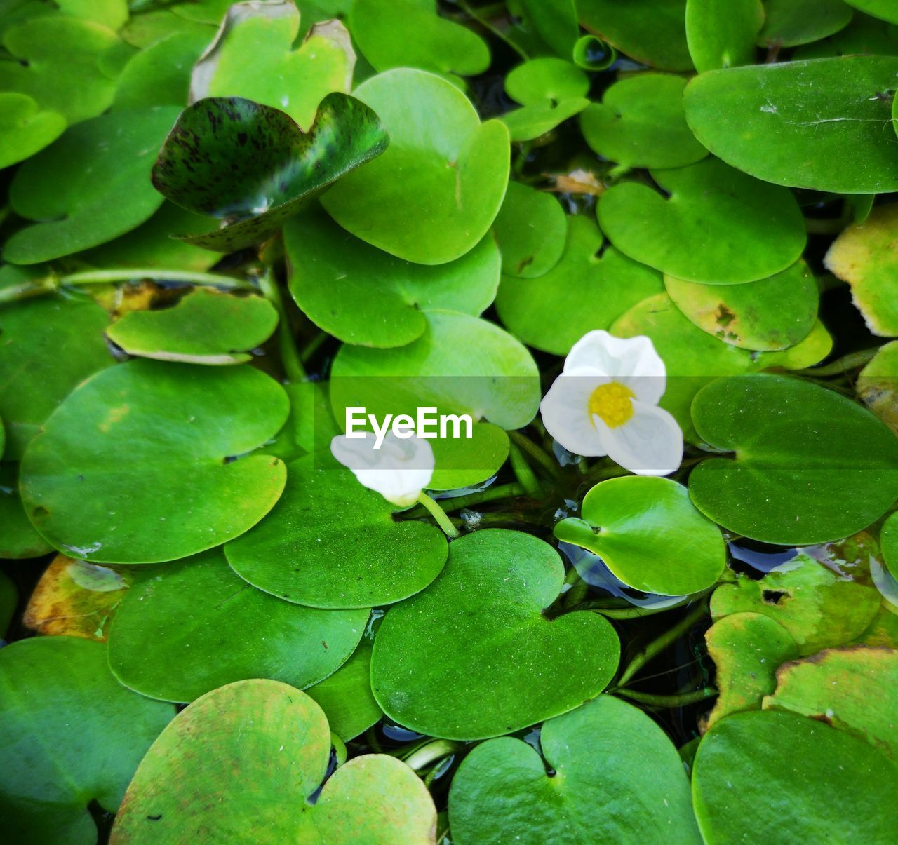 plant part, leaf, green color, growth, plant, beauty in nature, close-up, freshness, nature, no people, high angle view, day, flower, vulnerability, water, full frame, fragility, outdoors, flowering plant, clover, leaves