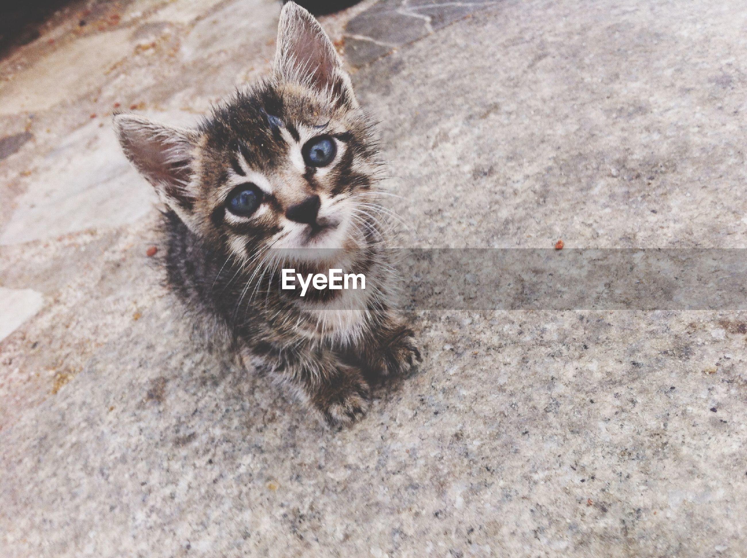 animal themes, one animal, domestic cat, mammal, cat, wildlife, feline, animals in the wild, whisker, pets, domestic animals, portrait, high angle view, looking at camera, close-up, sitting, relaxation, zoology, alertness, no people
