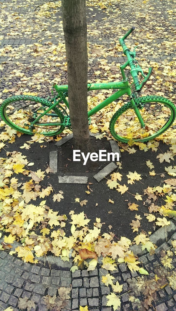 leaf, autumn, change, day, outdoors, nature, tree, tree trunk, no people, green color, growth, tranquility, bicycle, beauty in nature, close-up, maple