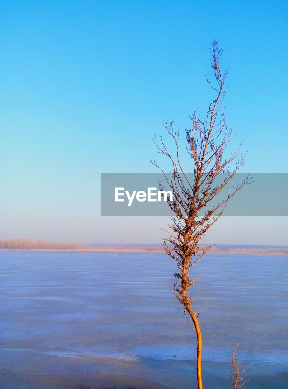 tranquility, nature, tranquil scene, beauty in nature, bare tree, blue, lone, outdoors, scenics, day, no people, branch, clear sky, sky, sea, landscape, tree