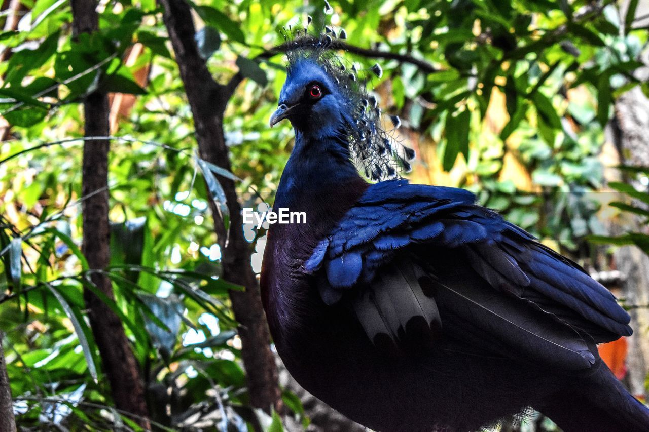 animal themes, bird, animal, animal wildlife, vertebrate, one animal, animals in the wild, plant, tree, focus on foreground, no people, perching, day, nature, black color, branch, close-up, growth, beauty in nature, beak