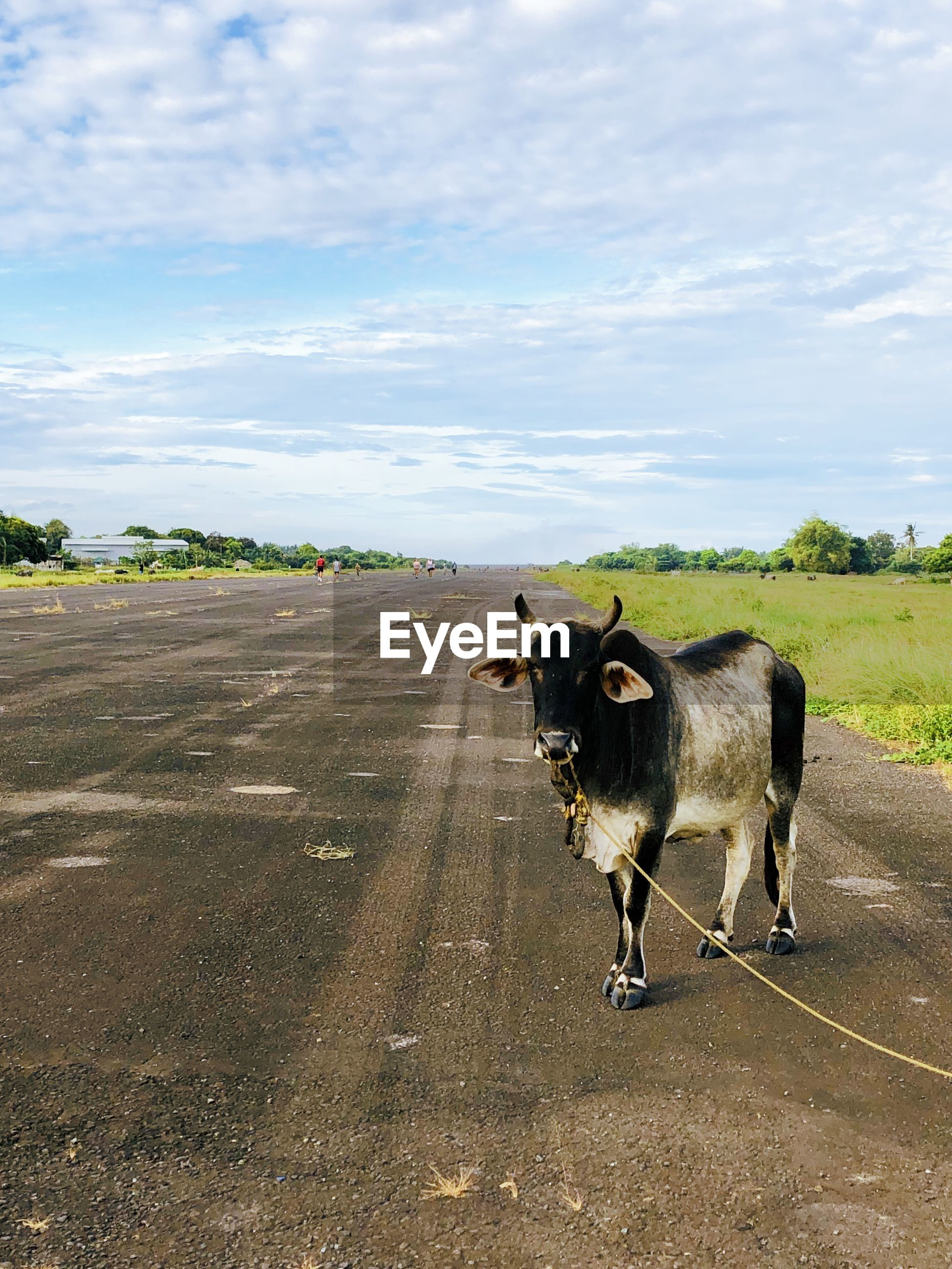 HORSE STANDING ON ROAD AMIDST LAND